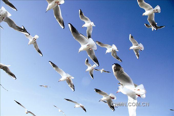 天高任鸟飞 飘影摄影