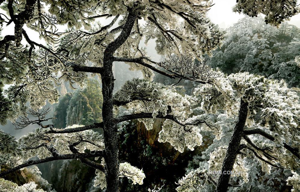【摄影】冬天画屏