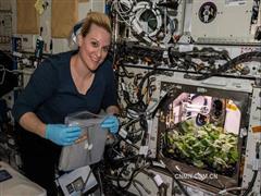 神奇的铝金属:能飞太空包蔬菜,能入世间建房子