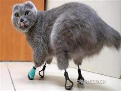 冻坏爪子的猫获得钛制新爪子
